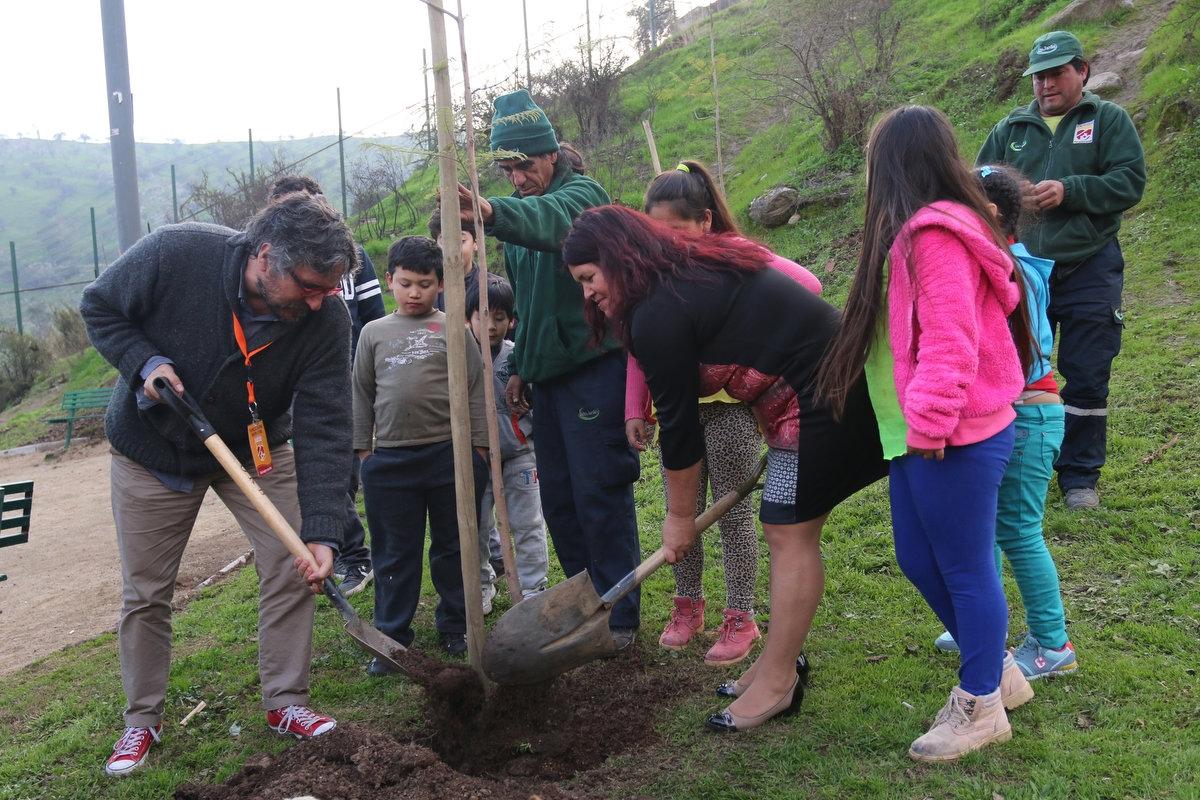 arborización